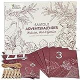 Samen Adventskalender 2021: Nachhaltiger Küche und Garten Adventskalender mit...